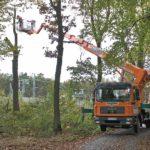 Einsatzgebiet Baumpflege